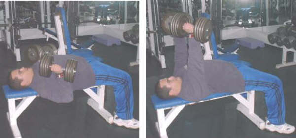 dumbbell bench press picture