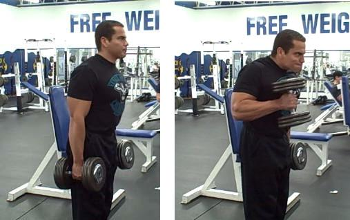 Blast Your Biceps From The Inside Out — Lee Hayward's Total ...