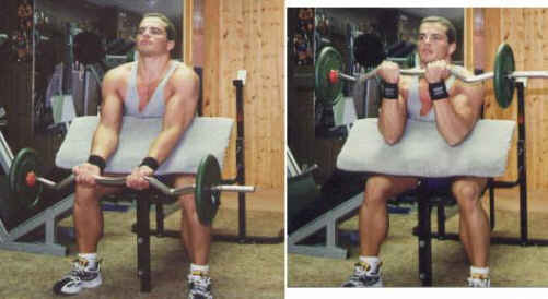 Preacher EZ bar bicep curls